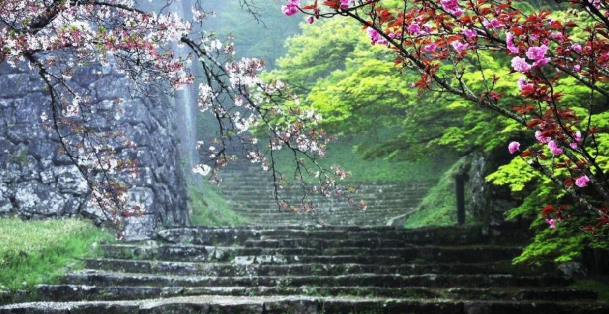 Sakura @ Hitoyoshi Castle