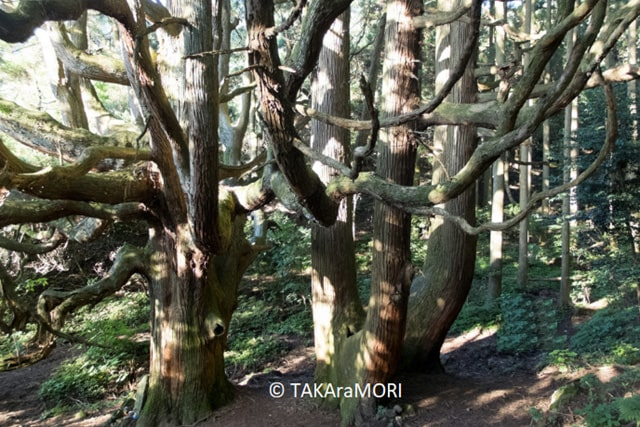 takamori06-min